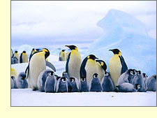 Travel with your Friends and Family like the Penguins!
