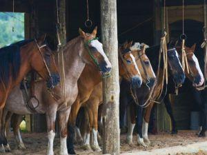 Argentian Estancia Horse stables